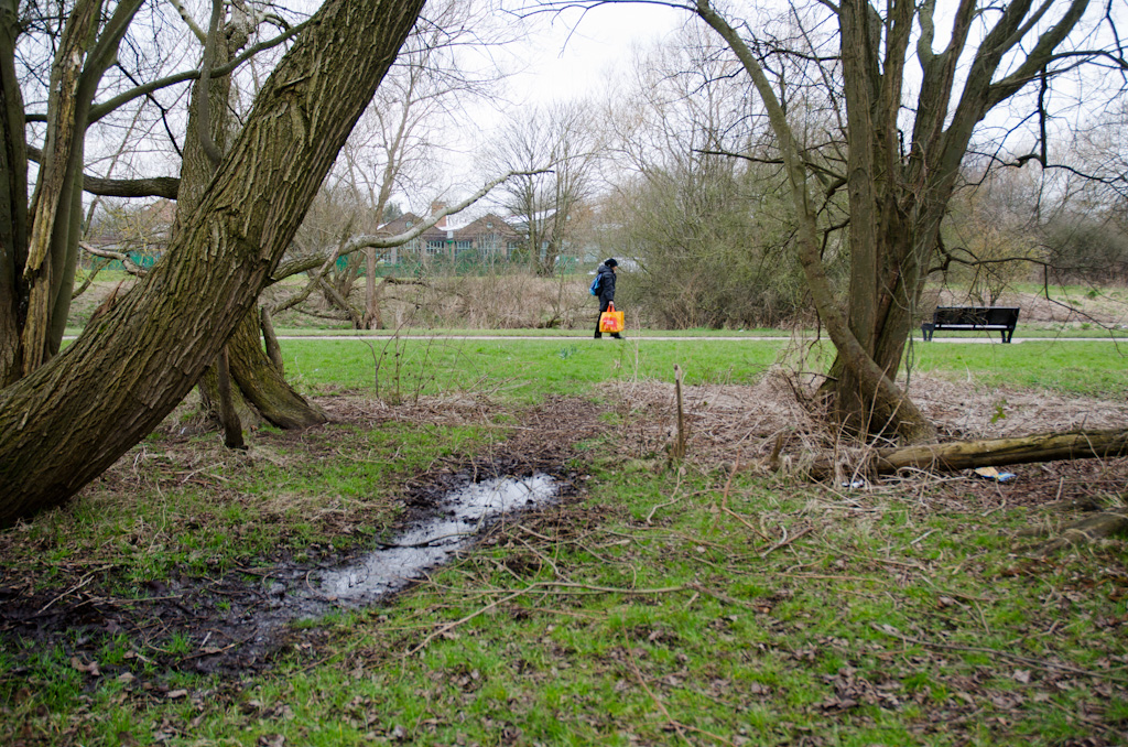 In the middle of the copse, a pool of water, fed from the left and leaving on the right.